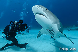 Jonathan filming Tiger Sharks, photo by Phil Colla
