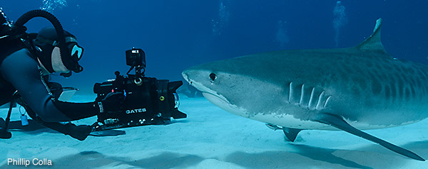Jonathan films a Tiger shark, photo by Phil Colla